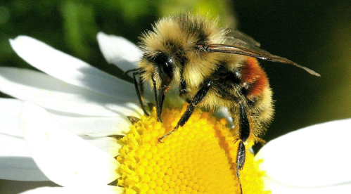 Can I Raise Bees In My Backyard bees